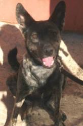 Viva San Felipe animal rescue